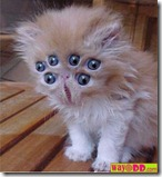 funny-pictures-alien-kitten-GXm